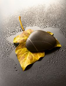 Free Leaf And Stone Royalty Free Stock Photo - 14500375