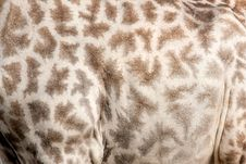 Free Giraffe Pattern Royalty Free Stock Photo - 14500445