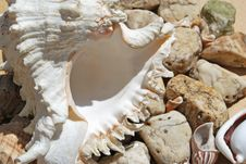 Free Few Seashells Stock Photo - 14500830