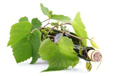 Free Bottle Of Wine In The Vine Royalty Free Stock Photography - 14501387