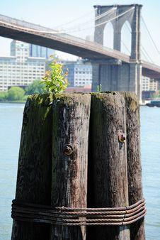 Free Dock Post And Brooklyn Bridge Stock Image - 14503111
