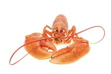 Free Closeup On A Lobsters Claws Royalty Free Stock Images - 14505169