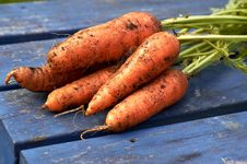 Free Carrots Freshly Pulled Royalty Free Stock Photos - 14505898