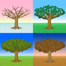 Free Four Seasons Of A Tree Stock Images - 14506844