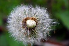 Free Dandelion, Blow Ball Royalty Free Stock Photo - 14507705