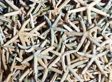Background Image Of Dried Starfish Stock Photos