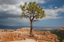 Free Tree At Bryce Canyon Royalty Free Stock Photography - 14508937