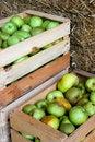 Free Crop Stock Photo - 14510100