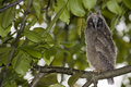 Free Young Owl Stock Images - 14510634