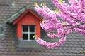Free Blossoming Tree Royalty Free Stock Photos - 14511338