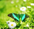 Free Butterfly On A Flower Royalty Free Stock Photos - 14511728