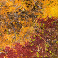 Free Autumn Deep Forest Carpet Stock Photo - 14515480