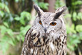 Free Eagle Owl Stock Images - 14517064