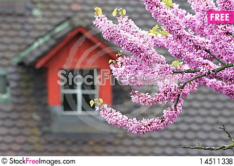 Blossoming tree Stock Photo