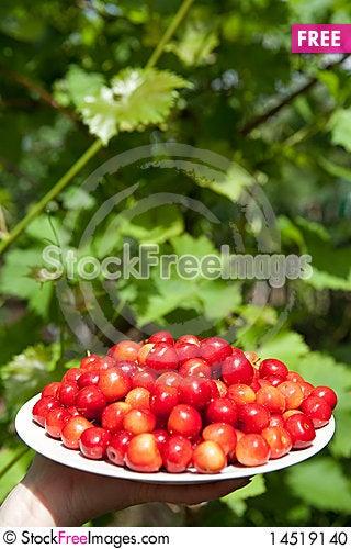 Free Tasty Cherries Stock Photo - 14519140