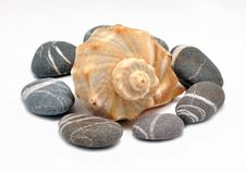 Free Marine Cockleshell And Stone Stock Images - 14510274