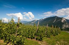 Free Apples And Mountains Royalty Free Stock Photography - 14510377