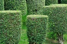 Free Shaped Bushes In Garden Plant Stock Images - 14510534