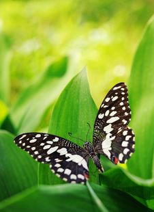 Free Butterfly On A Green Leaf Stock Photo - 14511730
