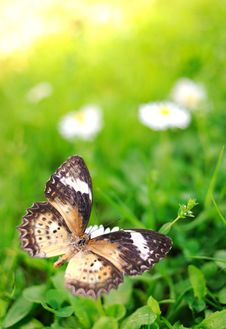 Free Butterfly On A Flower Stock Photography - 14511762