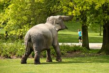 Free Elephant Stock Photos - 14511783