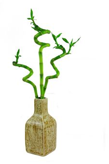 Free Three Bamboo Plant In The Pot Royalty Free Stock Image - 14513776