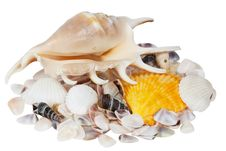 Free Cockleshells Royalty Free Stock Image - 14514796