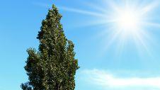 Free Tree A Poplar Stock Images - 14515644