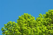 Free Green Foliage Stock Image - 14515951