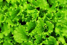 Free Top View Of The Salad Stock Photo - 14516160