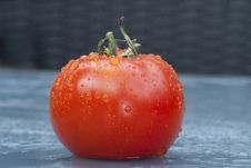 Free Tomato Royalty Free Stock Photography - 14517067