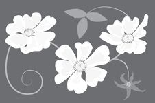 Free Shrub Rose In Shades Of Grey Royalty Free Stock Images - 14517139