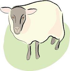 Free Sheep Royalty Free Stock Image - 14518116
