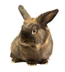 Free Rabbit Royalty Free Stock Photos - 14518568