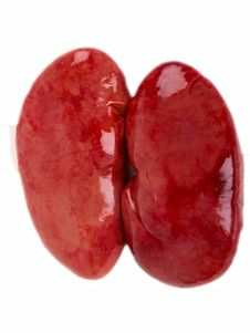 Free Pig Kidney Royalty Free Stock Photography - 14519157