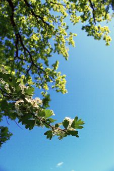 Free Trees And Blue Sky Background Stock Photo - 14519400