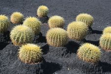Free Tropical Green Cactus Stock Image - 14519701
