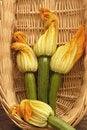 Free Zucchini Flowers Stock Photography - 14524422