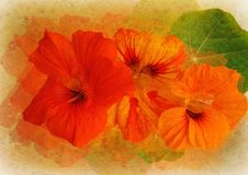 Free Floral Picture With Patina Texture Stock Image - 14520271