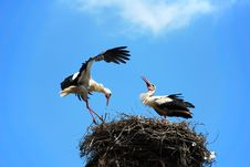 Free Storks In Nest Stock Photos - 14520553