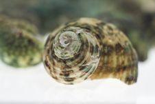 Beautiful Seashells On White Stock Images