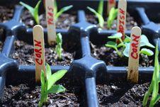 Free Planting Season Stock Photo - 14521180