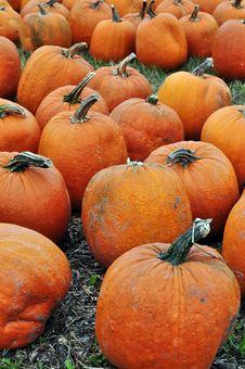 Free Pumpkins Stock Photo - 14521760