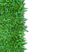 Free Green Grass Stock Photography - 14521782