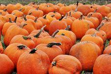 Free Pumpkins Royalty Free Stock Photo - 14521785