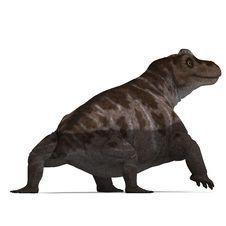 Free Dinosaur Keratocephalus. 3D Rendering With Stock Photo - 14521890