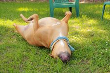 Free Dog Roll Over Stock Images - 14522364