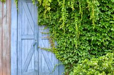 Door In Garden Covered By Liane Royalty Free Stock Photos