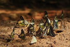 Free Butterfly Stock Photos - 14523663