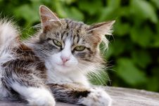 Free The Cat Has A Rest Stock Image - 14524111